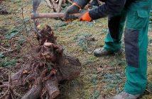 comment enlever une souche arbre